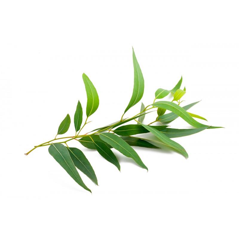 el mejor remedio natural para los problemas respiratorios