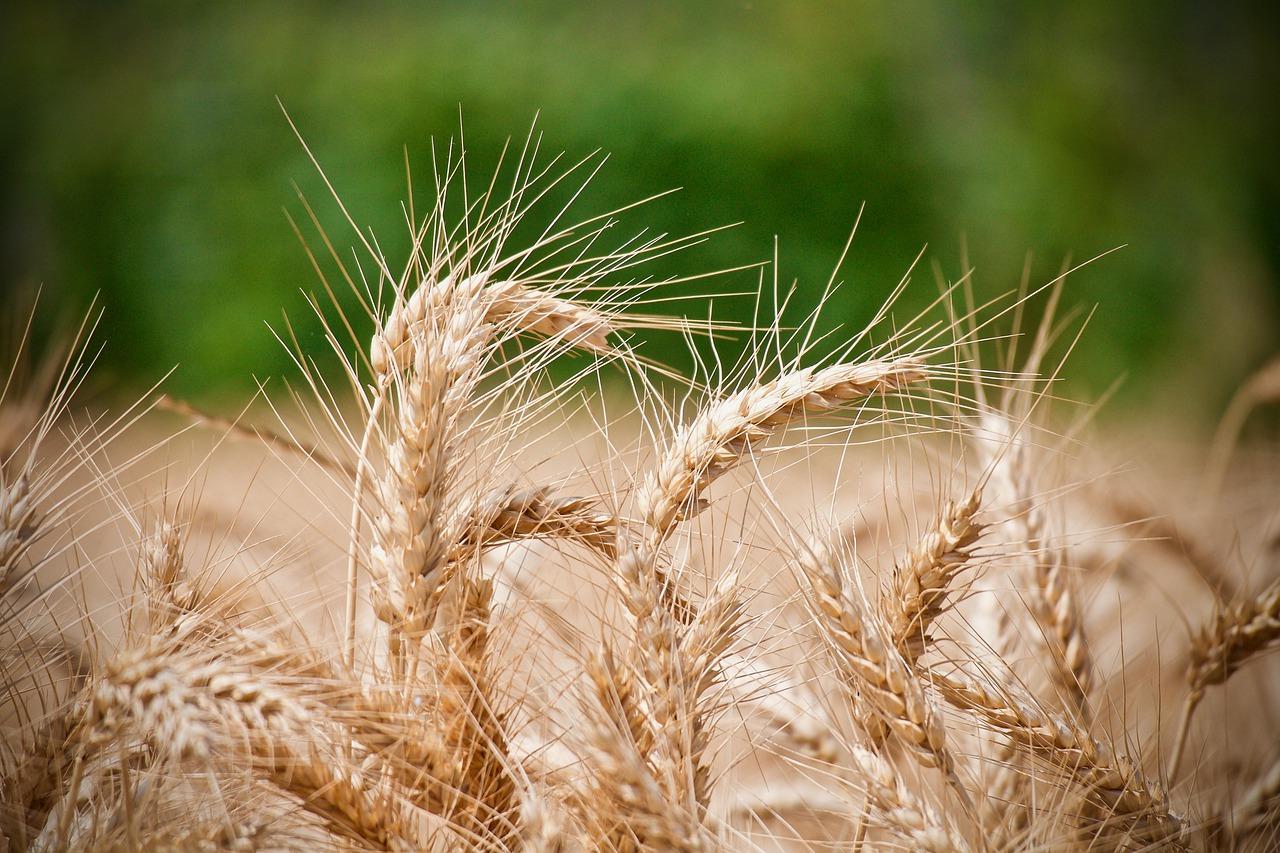 Los pequeños pueden ingerir el cereal a partir de los un par de años de edad.