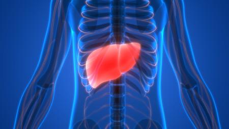 Síntomas de que tienes problemas con el hígado