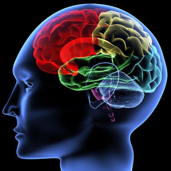 ¿Para qué exactamente es la endorfina?