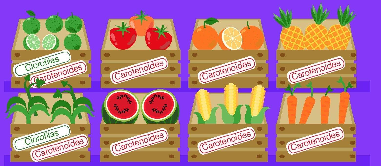 Los carotenoides son pigmentos vegetales responsables de los tonos colorado, amarillo y naranja en muchas frutas y hortalizas.