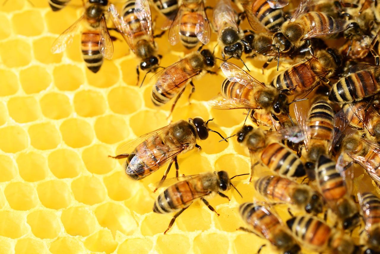 Beneficio de la miel para sanar el insomnio